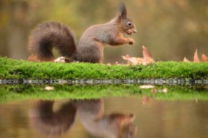 Squirrel Posing Right in Front of my Camera #photography